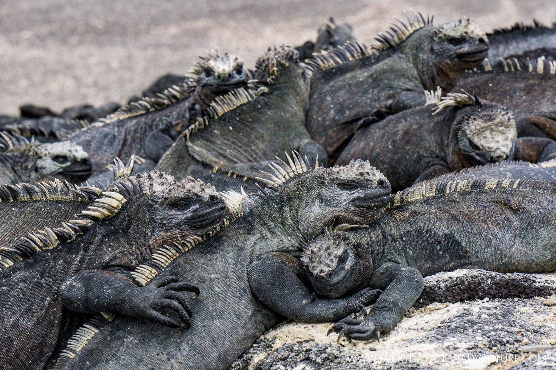 [SqSpGallery-015] Galapagos-479.jpg