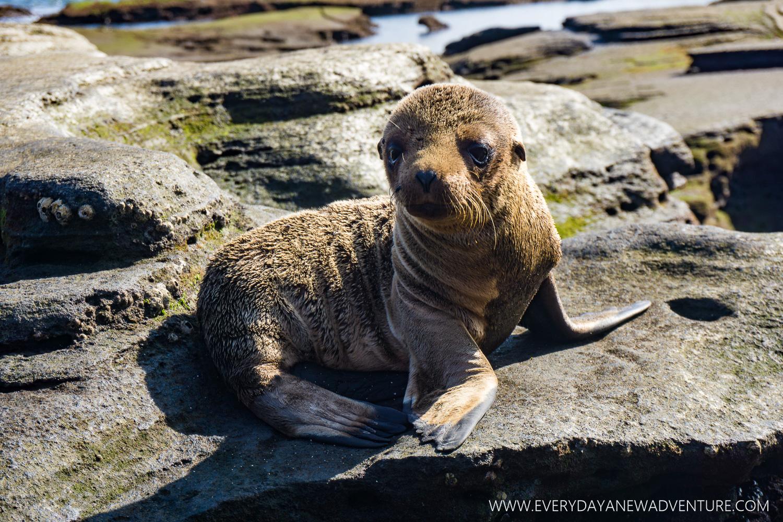 [SqSpGallery-033] Galapagos-1090.jpg