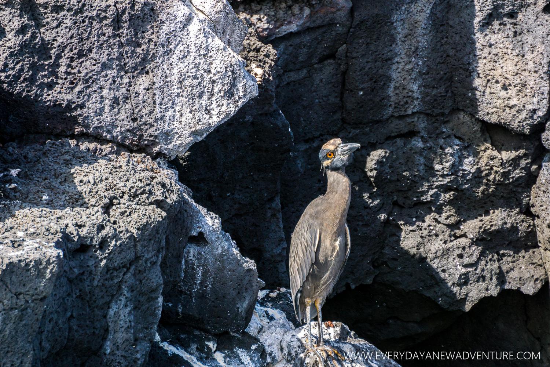 [SqSpGallery-036] Galapagos-1176.jpg
