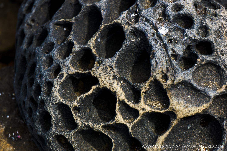 [SqSpGallery-039] Galapagos-1292.jpg