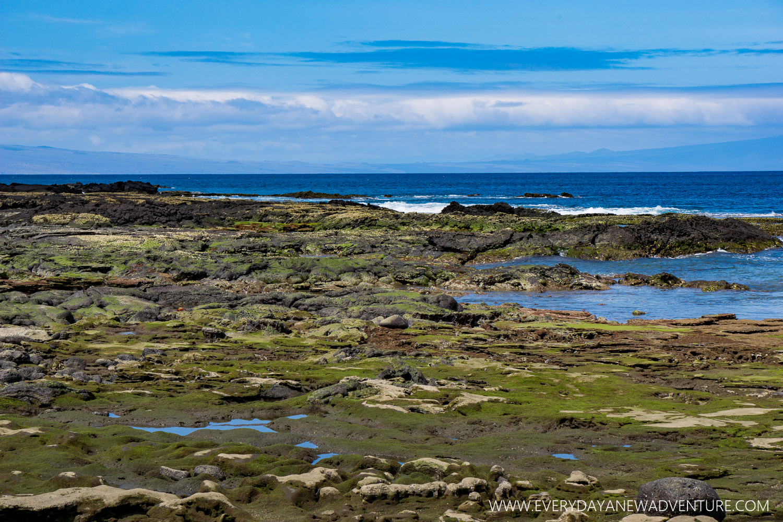 [SqSpGallery-041] Galapagos-1357.jpg