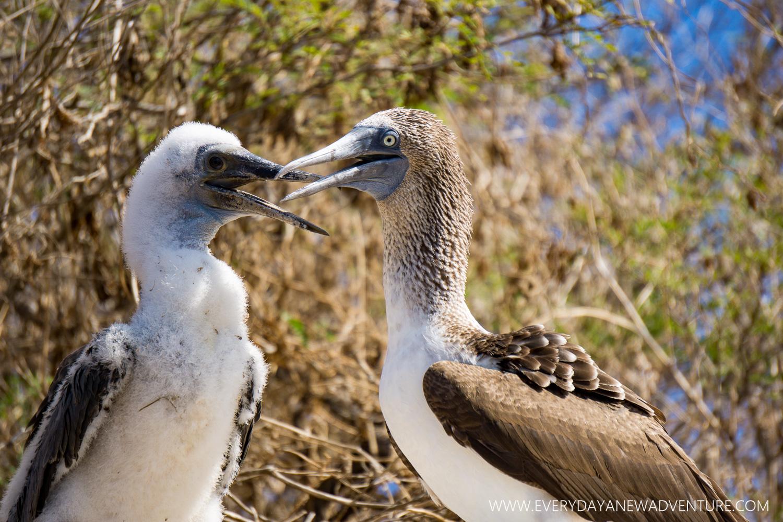 [SqSpGallery-073] Galapagos-2052.jpg