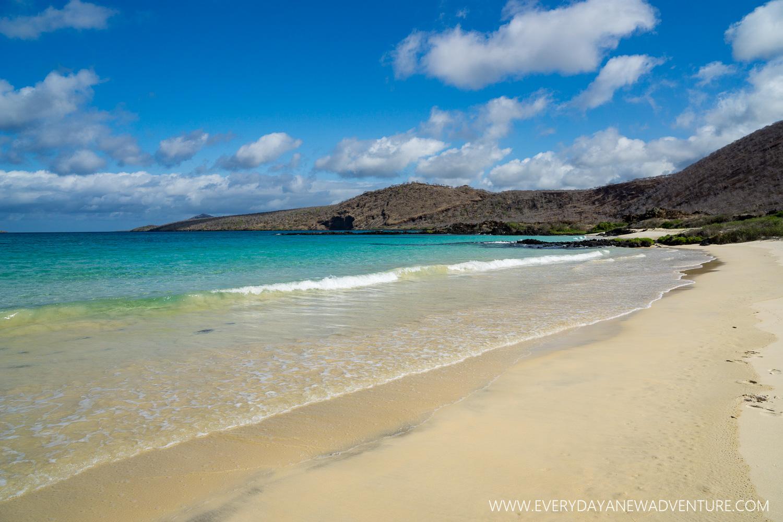 [SqSpGallery-075] Galapagos-2095.jpg