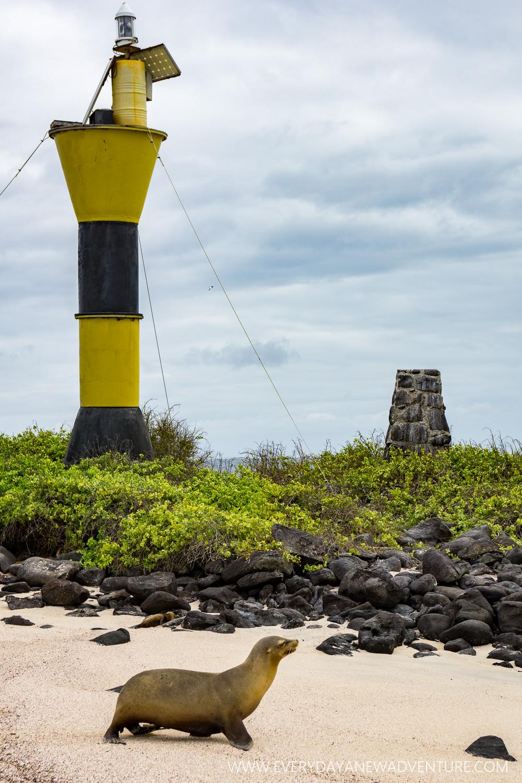 [SqSpGallery-085] Galapagos-2363.jpg