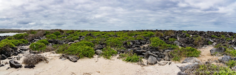 [SqSpGallery-086] Galapagos-2374-Pano.jpg
