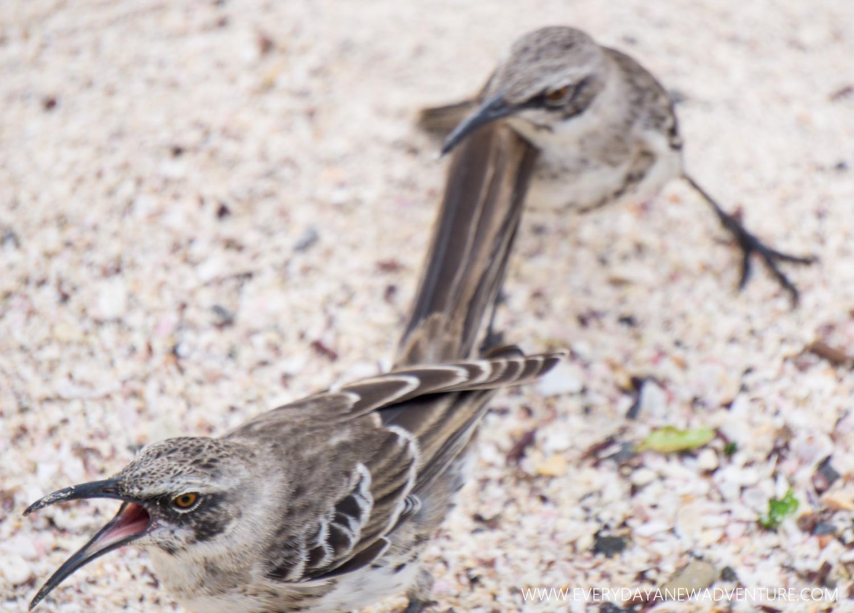 [SqSpGallery-087] Galapagos-2390.jpg