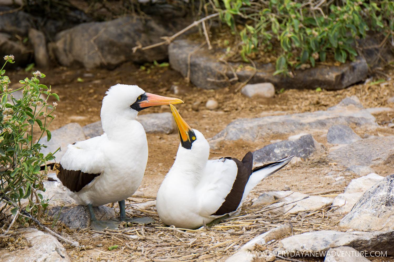 [SqSpGallery-094] Galapagos-2550.jpg