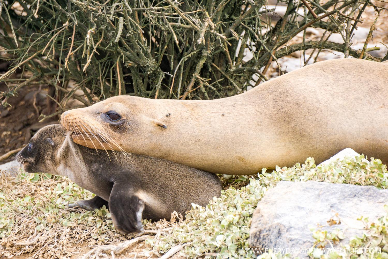 [SqSpGallery-095] Galapagos-2606.jpg