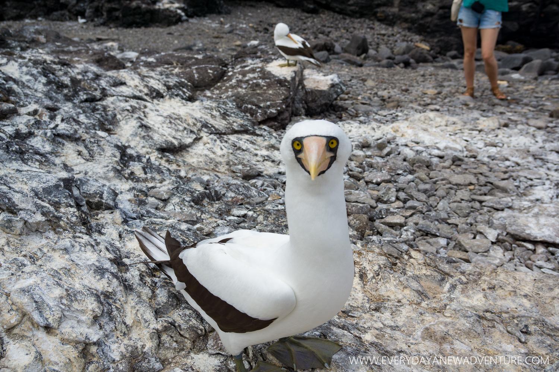 [SqSpGallery-099] Galapagos-2642.jpg