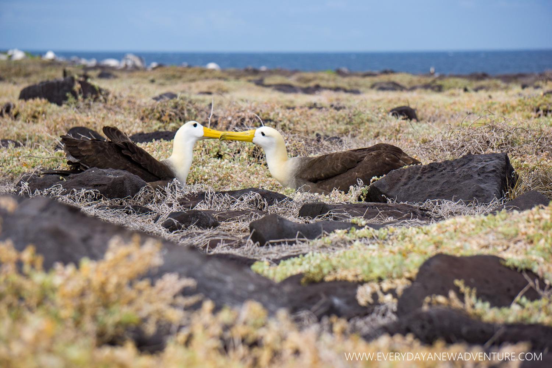 [SqSpGallery-100] Galapagos-2688.jpg