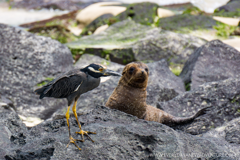 [SqSpGallery-105] Galapagos-2934.jpg