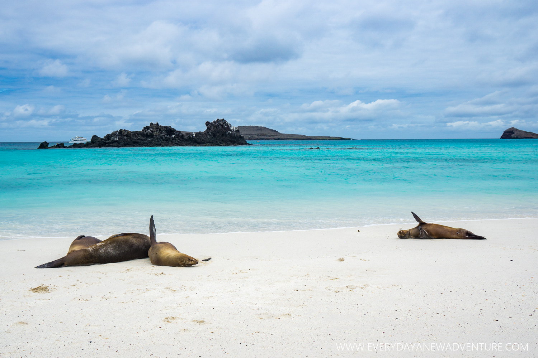 [SqSpGallery-110] Galapagos-3012.jpg