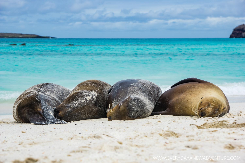 [SqSpGallery-111] Galapagos-3046.jpg