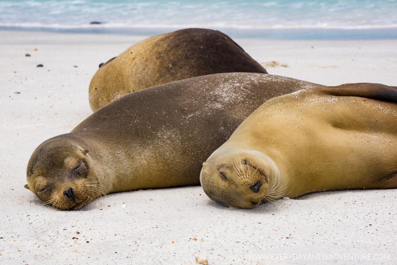 [SqSpGallery-113] Galapagos-3111.jpg