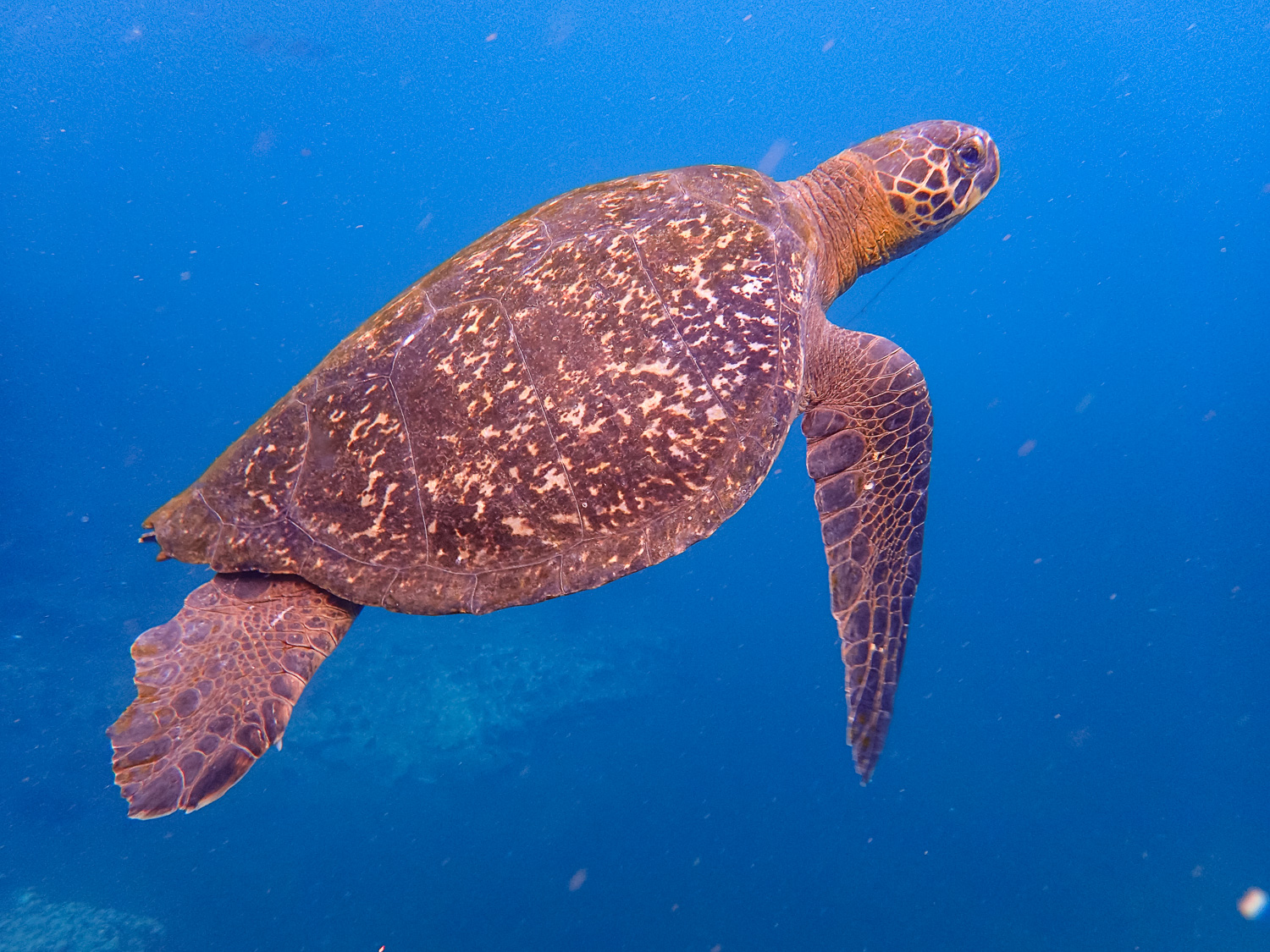 Swimming with beautiful sea turtles! (Photo courtesy of Victor)