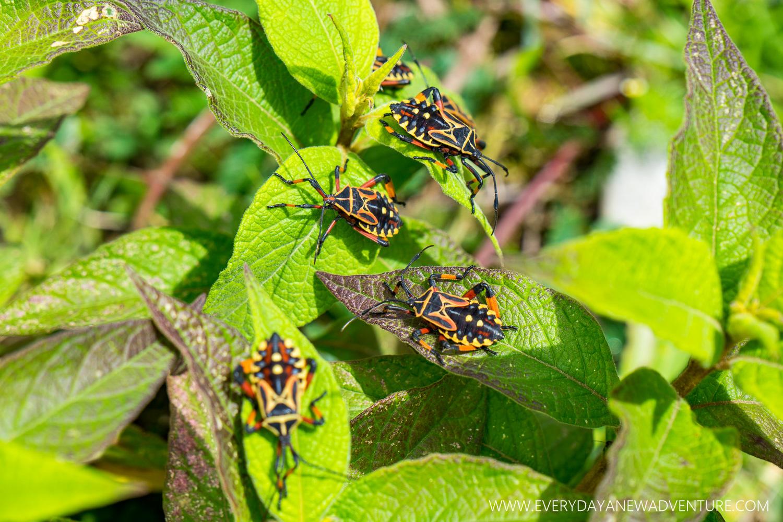 Pretty beetles!