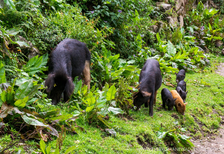 [SqSp Blog-039] Cusco-09714.jpg