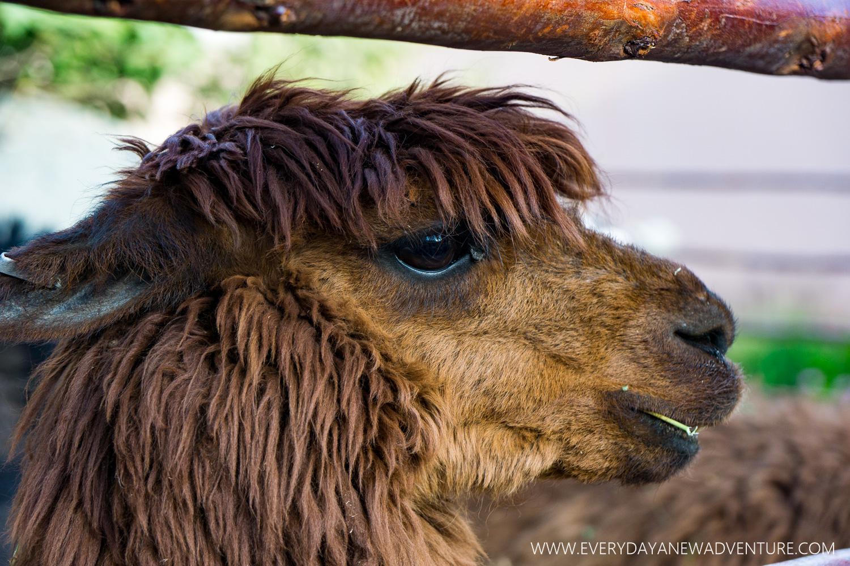 [SqSp Blog-002] Arequipa-01244.jpg