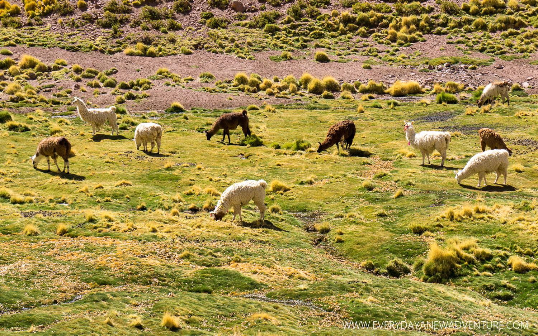 [SqSp Blog-037] San Pedro de Atacama-03058.jpg