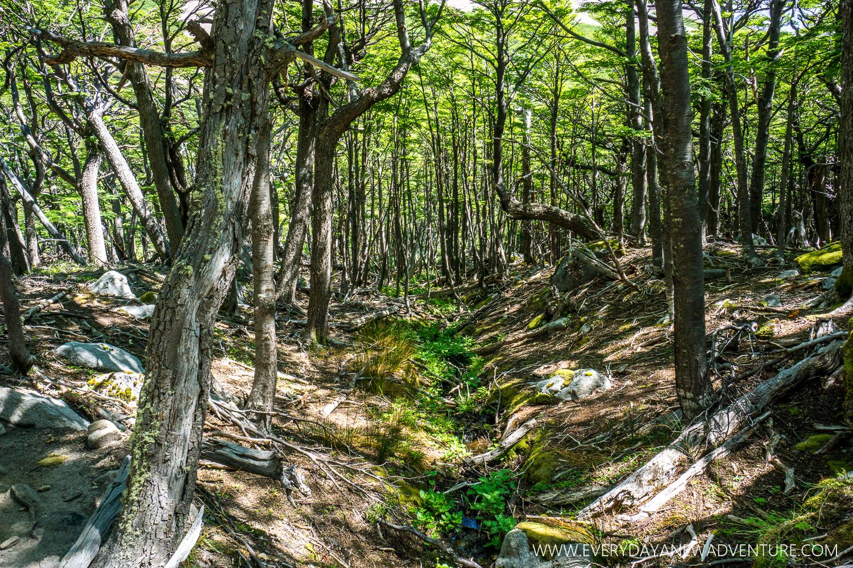 [SqSp Blog-032] Torres del Paine-04598.jpg