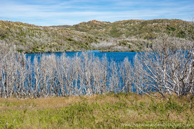 [SqSp Blog-035] Torres del Paine-04706.jpg