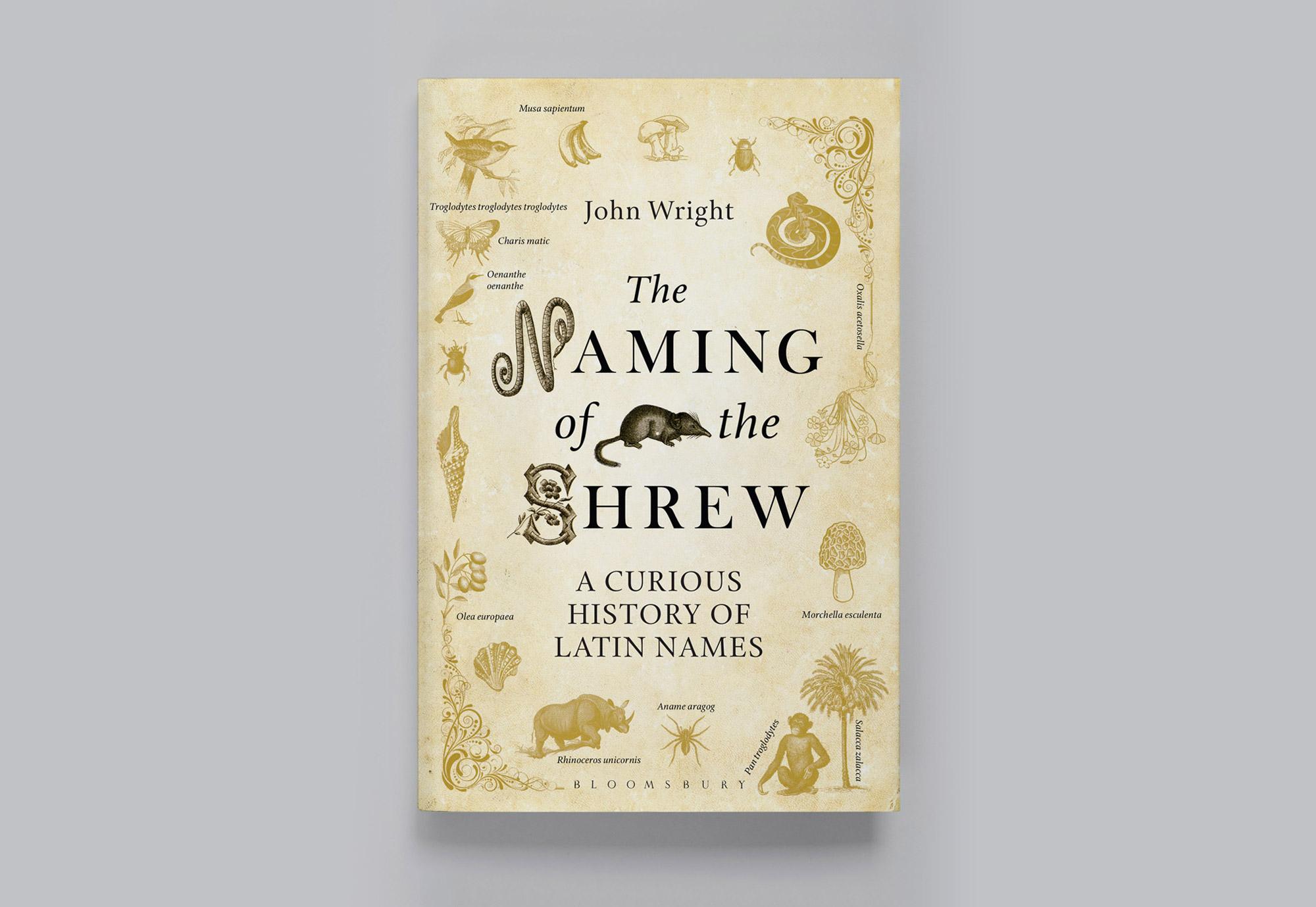 shrew-1.jpg