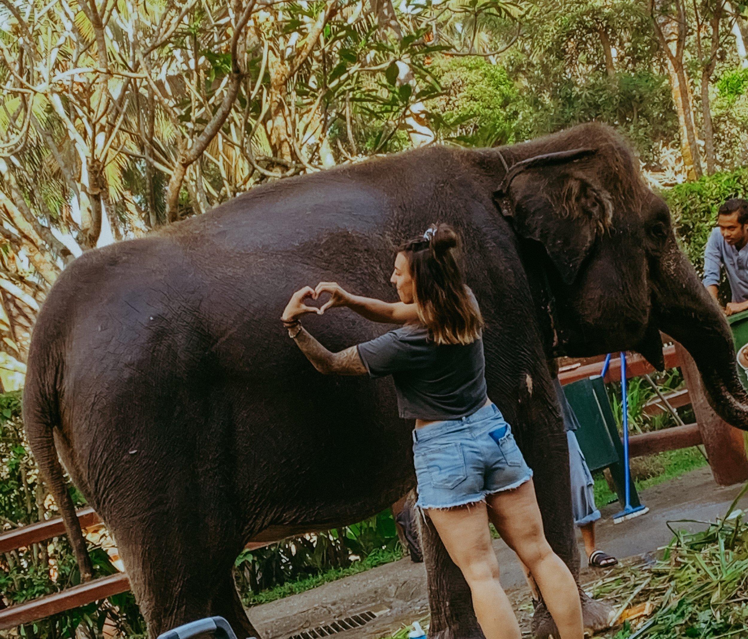 15 month pregnant Ditri the Sumatran Elephant <3