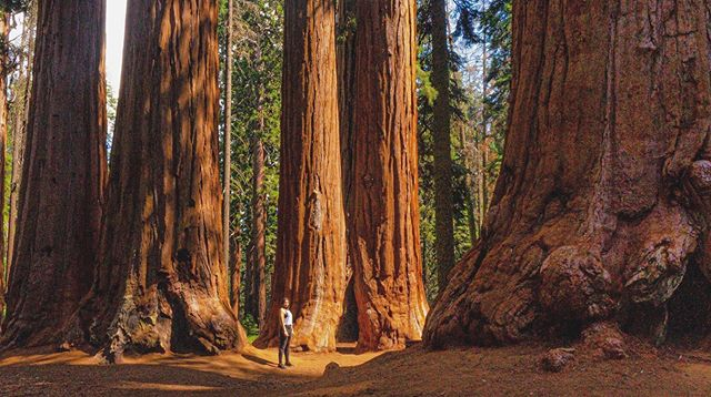 Here, sown by the Creator's hand,