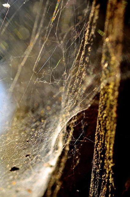 web.pics.light.017.jpg