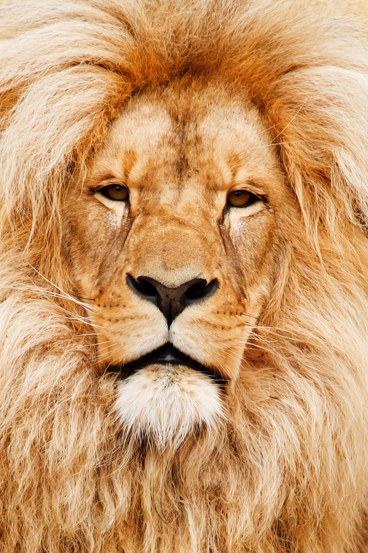 africa-african-animal-41315.jpg