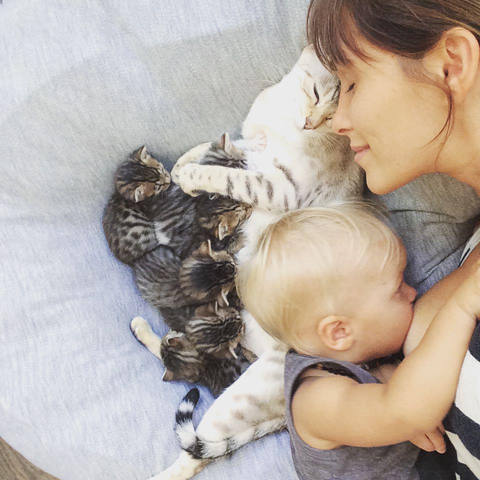 Ivette nursing next to her cat nursing kittens