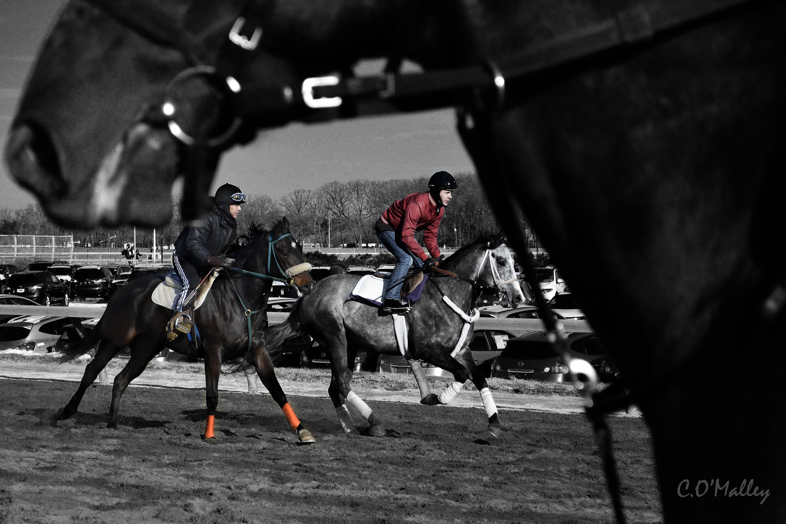 framed_by_horsehead.jpg