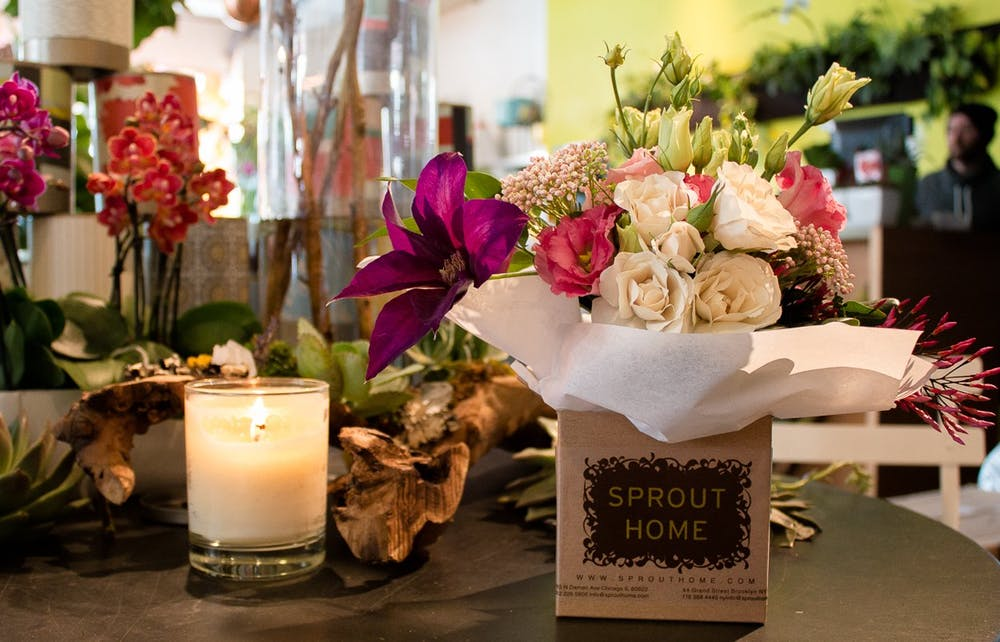 Sprout Home Chicago feature shot for Apartment Therapy