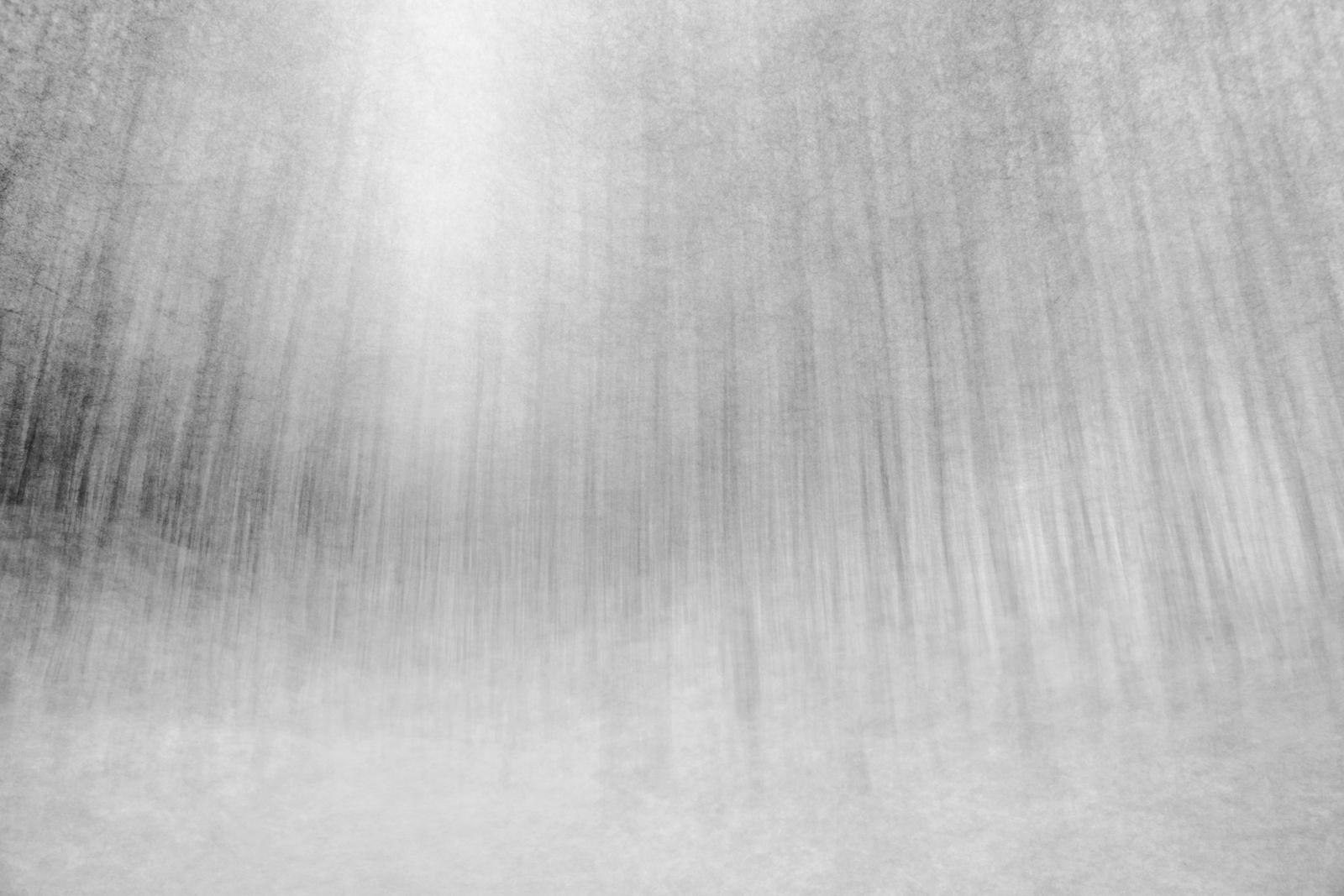 Back through the woods variations lighter.jpg