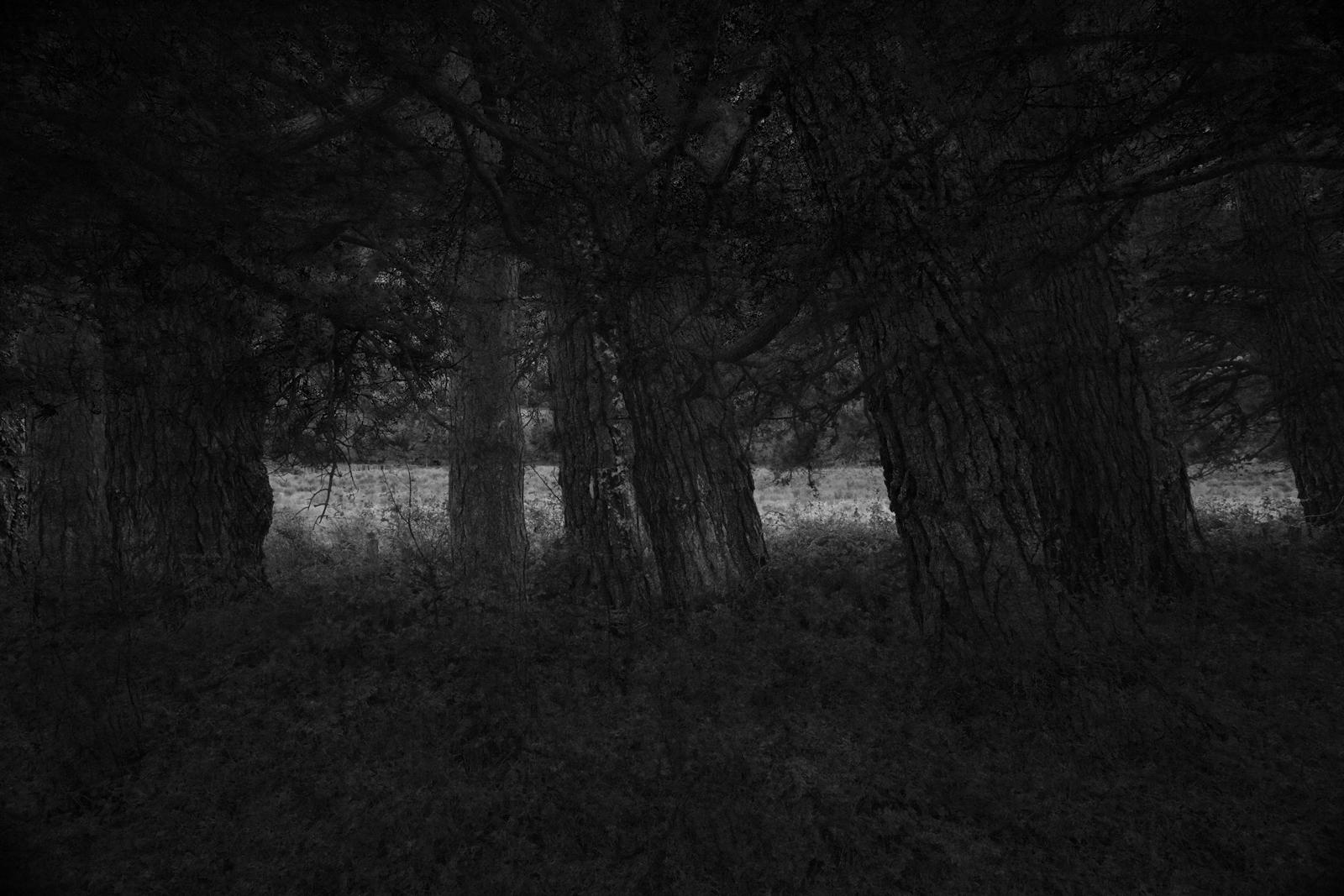 Night falls.jpg