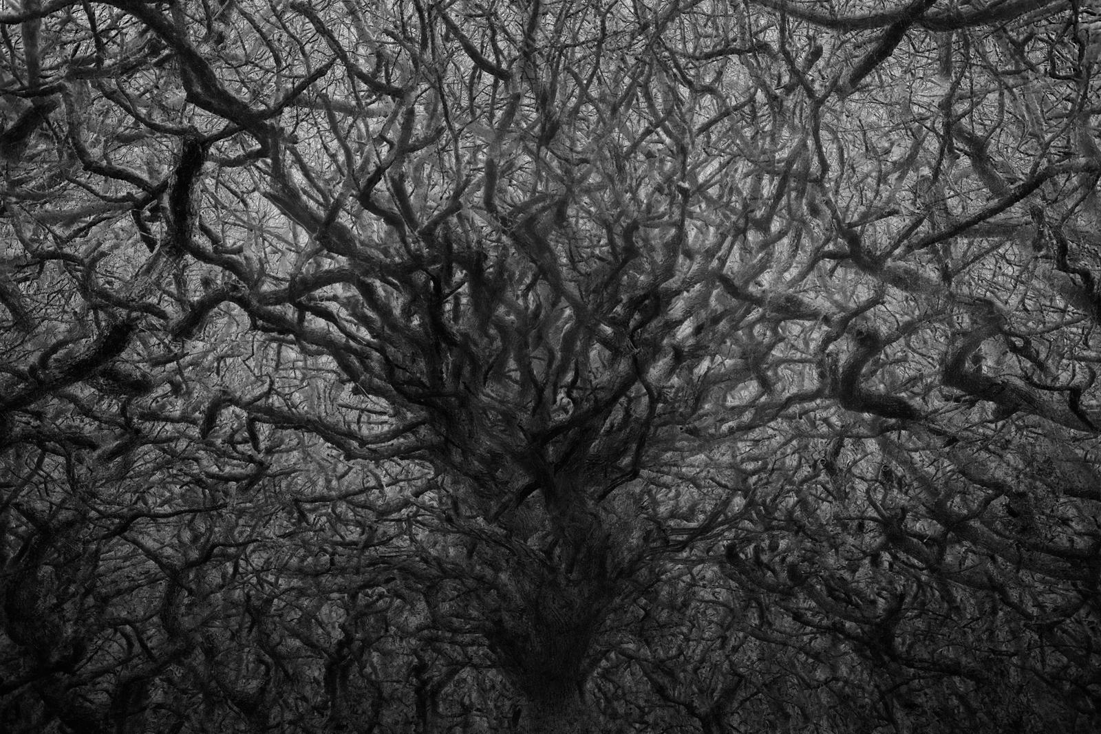 tree 20 lighter contrast.jpg