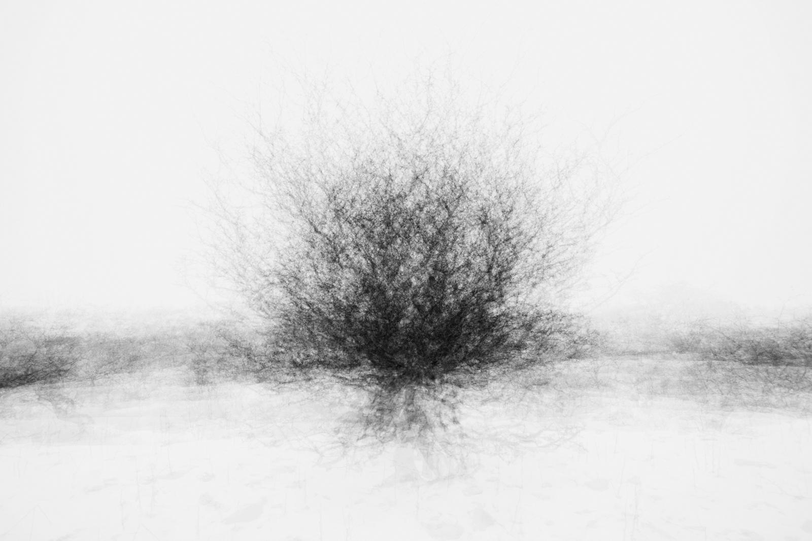 Circled hawthorn.jpg