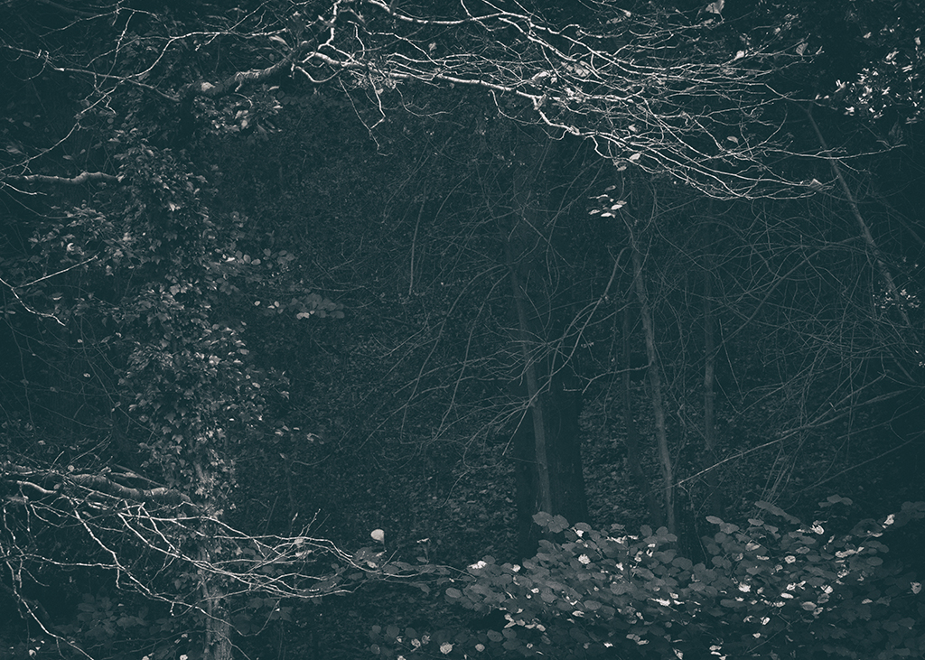 The Secret Language of Trees Week 4 October_20171028_0173BW toned.jpg