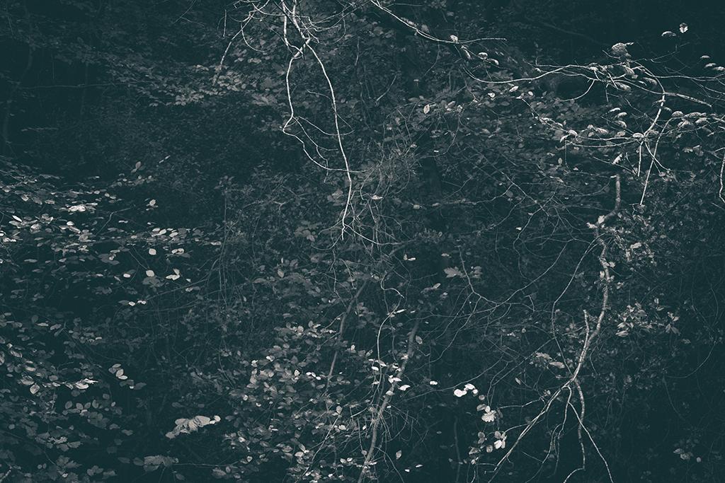 The Secret Language of Trees Week 4 October_20171028_0179_1BW toned.jpg