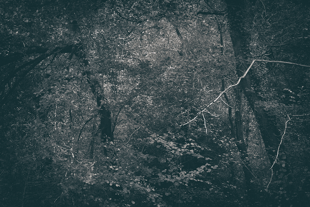 The Secret Language of Trees Week 5 October_20171102_0020_1BW toned.jpg