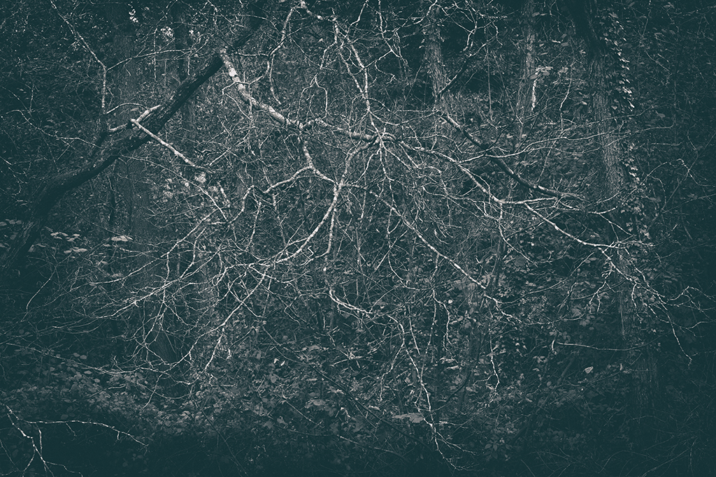 The Secret Language of Trees Week 5 October_20171102_0026_1BW toned.jpg