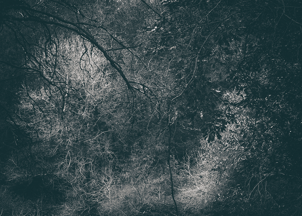 The Secret Language of Trees Week 5 October_20171102_0048_1BW toned.jpg