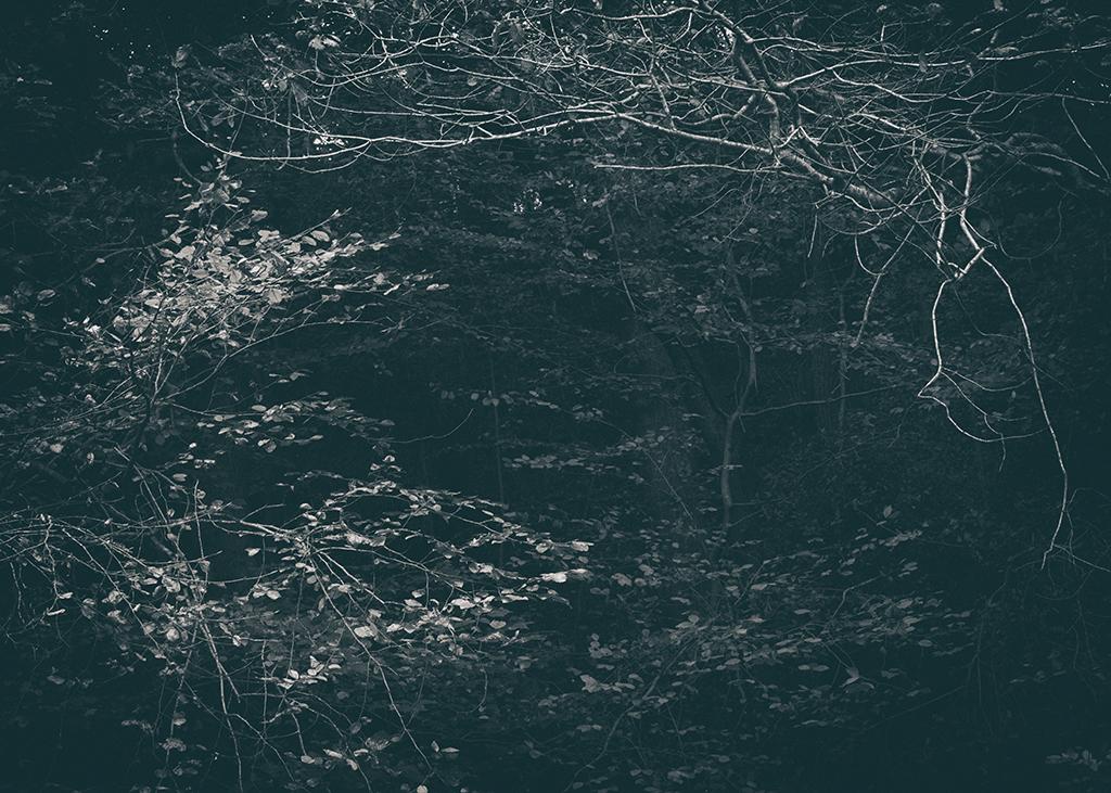 The Secret Language of Trees Week 5 October_20171102_0058_1BW toned.jpg