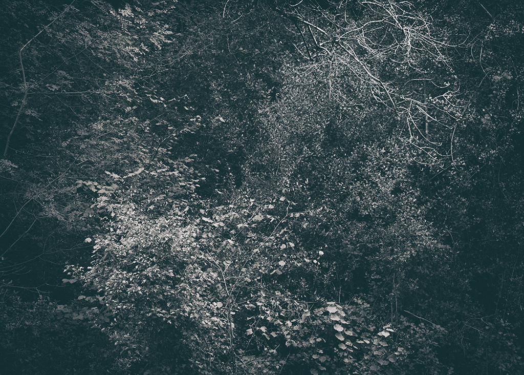 The Secret Language of Trees Week 5 October_20171102_0105_1_1BW toned.jpg