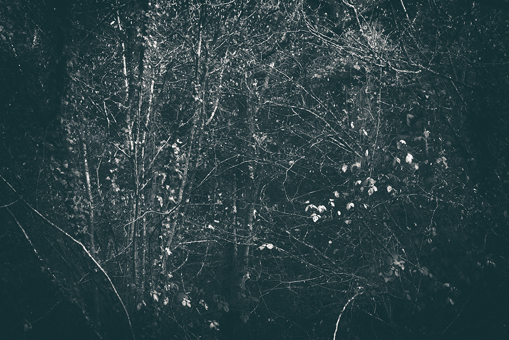 The Secret Language of Trees Week 8, November_20171123_0056_1_1BW toned.jpg