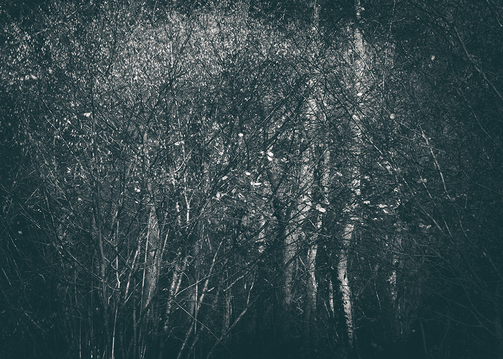 The Secret Language of Trees Week 8, November_20171123_0059_1BW toned.jpg