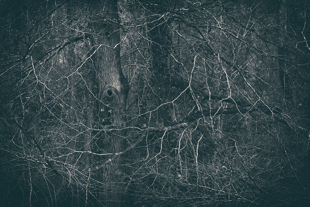 The Secret Language of Trees Week 8, November_20171123_0070_1BW toned.jpg