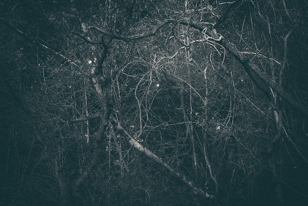 The Secret Language of Trees Week 8, November_20171123_0122BW toned.jpg