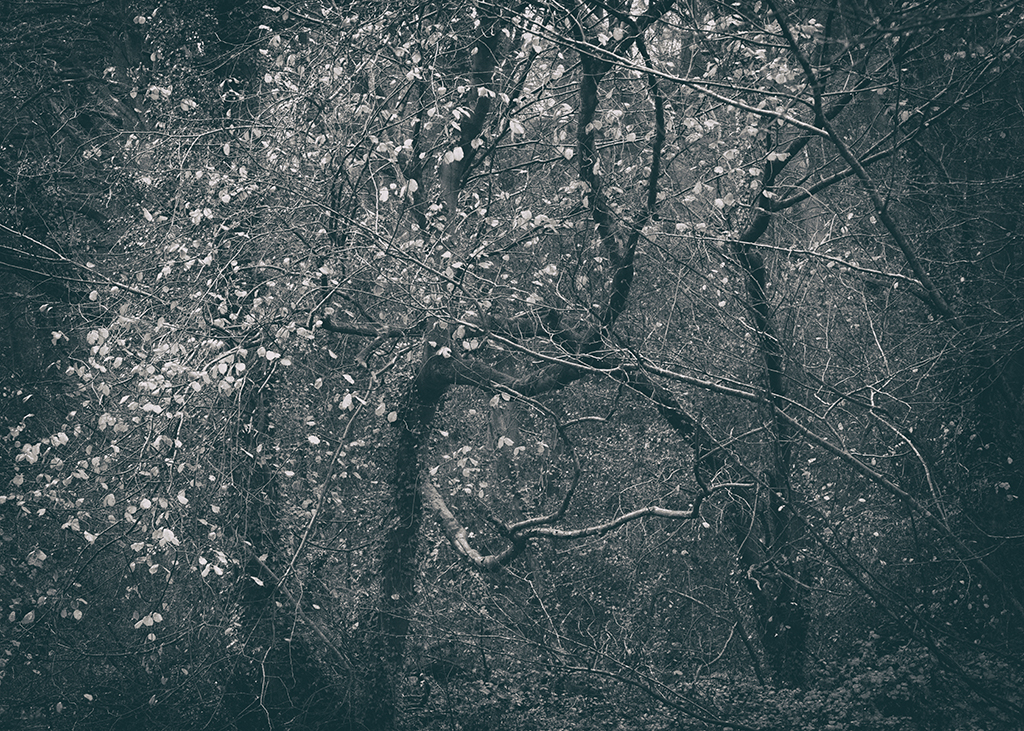 The Secret Language of Trees Week 8, November_20171123_0170BW toned.jpg