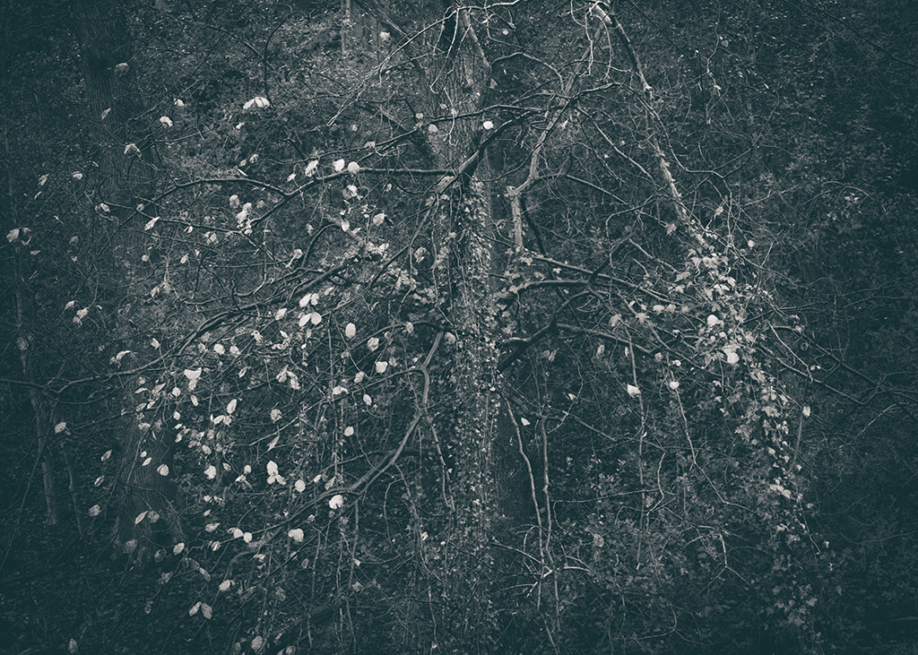 The Secret Language of Trees Week 8, November_20171123_0185_1BW toned.jpg